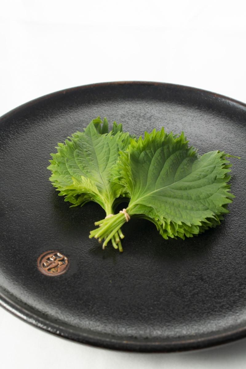 Shiso-Japanese basil